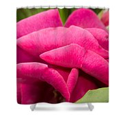 Red Rose Rising Shower Curtain