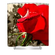 Red Rose #2 Shower Curtain