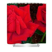 Red Rose Twins  Shower Curtain