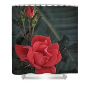 Red Rose With Bud Shower Curtain