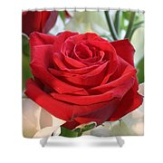 Red Rose With Garden Background  Shower Curtain