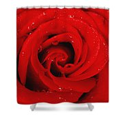 Red Rose With Water Drops Shower Curtain