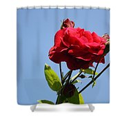 Red Roses With Blue Sky Background Shower Curtain