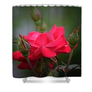 Red Rose 14-1 Shower Curtain