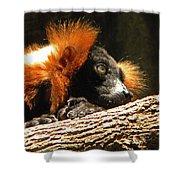 Red Ruffed Lemur Shower Curtain