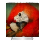 Red Scarlet   Macaw Parrot Sammy Shower Curtain