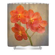Red Scarlet Orchid On Grunge Shower Curtain by Rudy Umans