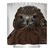 Red Shouldered Hawk Close Up Shower Curtain