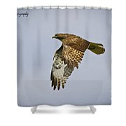 Red-shouldered Hawk Flyby Shower Curtain