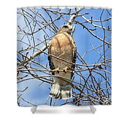 Red Shouldered Hawk In Tree Shower Curtain
