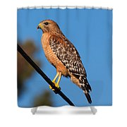 Red-shouldered Hawk On A Wire Shower Curtain