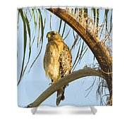 Red-shouldered Hawk On The Palm Tree Shower Curtain