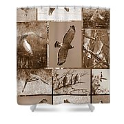Red-shouldered Hawk Poster - Sepia Shower Curtain by Carol Groenen