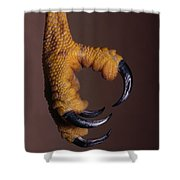 Red-shouldered Hawk Talons Shower Curtain