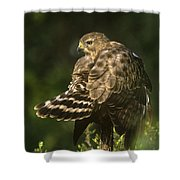 Red-shouldered Hawk Wild Texas Shower Curtain