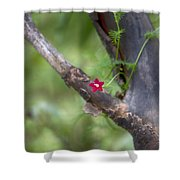 Red Simplicity V3 Shower Curtain