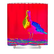 Red Sky Seagull Shower Curtain