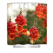 Red Snapdragons Shower Curtain