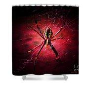 Red Spider Shower Curtain