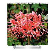 Red Spider Lily Shower Curtain
