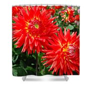 Red Spikey Flowers Shower Curtain