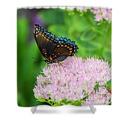 Red Spotted Admiral On Sedum - Vertical Shower Curtain