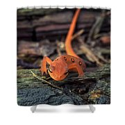Red Spotted Newt Shower Curtain