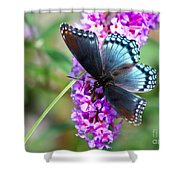 Red Spotted Purple Butterfly On Butterfly Bush Shower Curtain