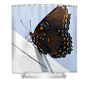 Red Spotted Purple Shower Curtain
