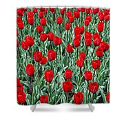 Red Spring Shower Curtain