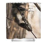 Red Squirrel - Balance Shower Curtain