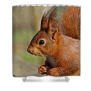Red Squirrel 2 Shower Curtain