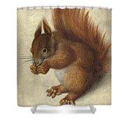 Red Squirrel  Shower Curtain