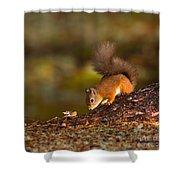 Red Squirrel In Autumn Shower Curtain