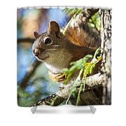 Red Squirrel In The Sun Shower Curtain