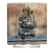Red Squirrel On Patio Chair II Shower Curtain