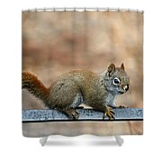 Red Squirrel On Patio Chair Shower Curtain