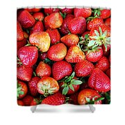 Red Strawberries Shower Curtain