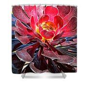 Red Succulent Plant Shower Curtain