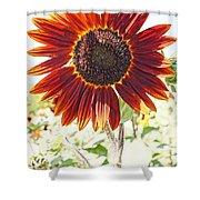 Red Sunflower Glow Shower Curtain