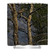 Red-tail Hawk   #0596 Shower Curtain