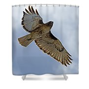 Red-tail Hawk #3094 Shower Curtain