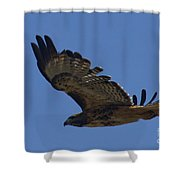 Red-tail Hawk  #7602 Shower Curtain