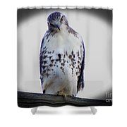 Red Tail Hawk Looking Curious Shower Curtain