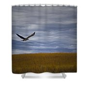 Red Tail Hawk Over The Prairie Shower Curtain