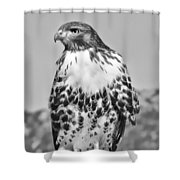 Red Tail Hawk Youth Black And White Shower Curtain