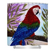 Red Tail Macaw Shower Curtain