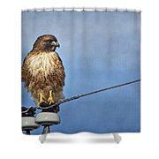 Red Tail On Watch Shower Curtain