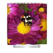 Red-tailed Bumble Bee Shower Curtain