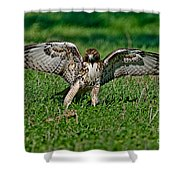 Red-tailed Hawk & Gopher Snake Shower Curtain